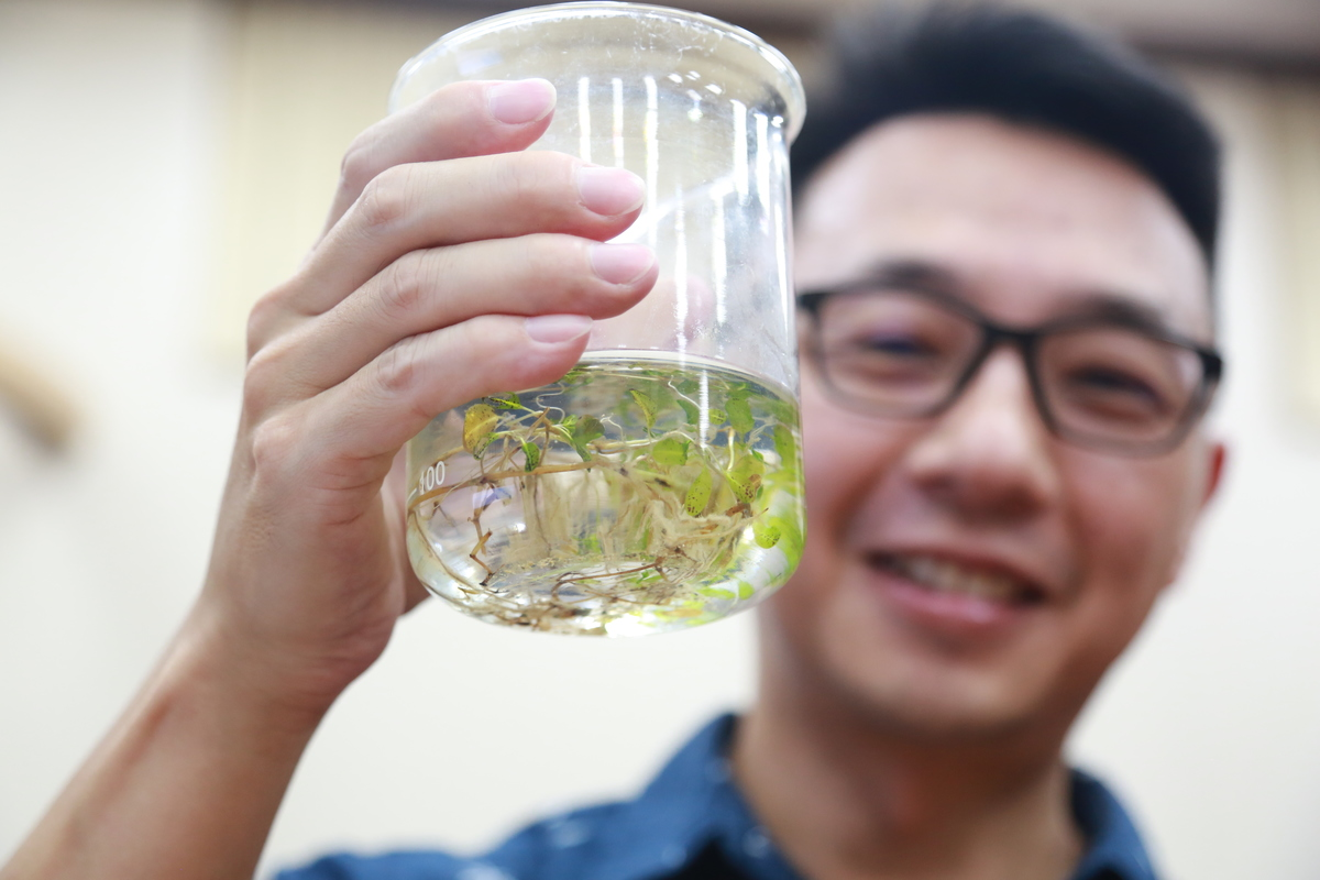 First                   case of hybridization among Halophila seagrass discovered by                  NSYSU and University of Ruhuna